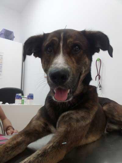 acupuntura-en-perros-Barcelona