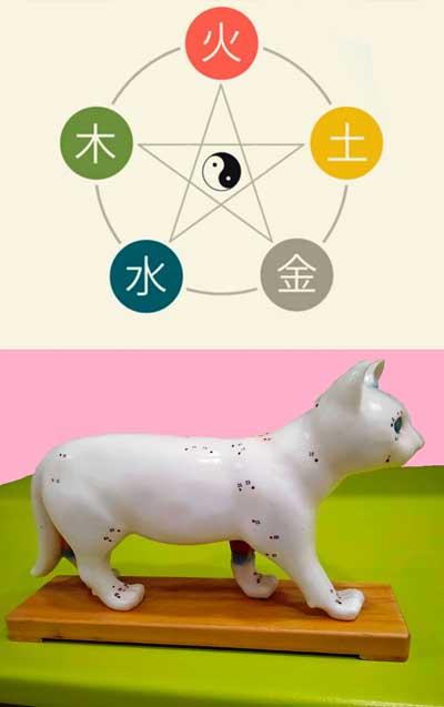 acupuntura-veterinaria-en-barcelona-según-la-medicina-tradicional-china