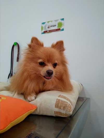 acupuntura-veterinaria-para-perros-en-barcelona